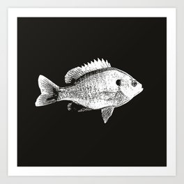 Black and White Bluegill Art Print