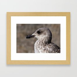 Young Seagull Framed Art Print