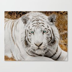 WHITE TIGER GAZE Canvas Print