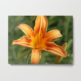 Orange Delight Snapshot Photography Metal Print