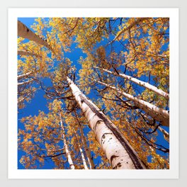 Aspen Trees Against The Sky In Crested Butte, Colorado Art Print