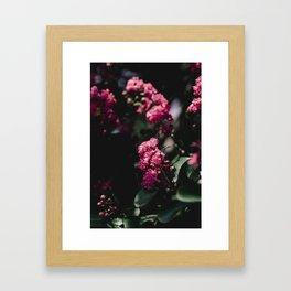 pinks iii Framed Art Print
