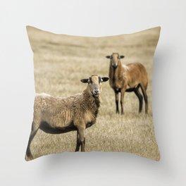 Barbados Blackbelly Sheep Throw Pillow