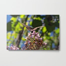 Butterfly on Lilacs Metal Print