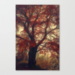 Copper Beech Canvas Print