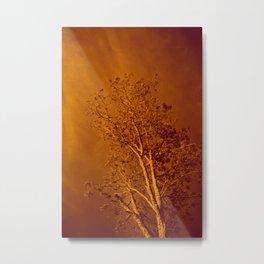Amber In Silence Metal Print