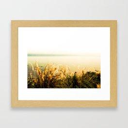 Silver Grass Framed Art Print
