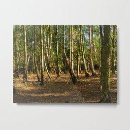 Silver Birch Tree Trunks Metal Print