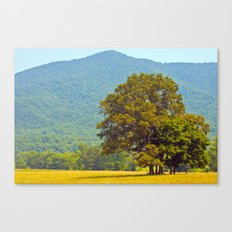 hot smoky mountain Canvas Print