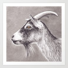 Little goat Art Print