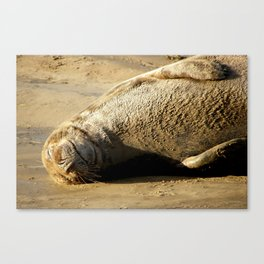 Seal Just Chilling ! Canvas Print