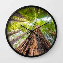 Muir Woods- Sequoia Trees Wall Clock