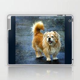 Small dog on the street Laptop & iPad Skin