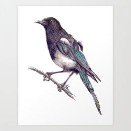 Juvenile Magpie Art Print