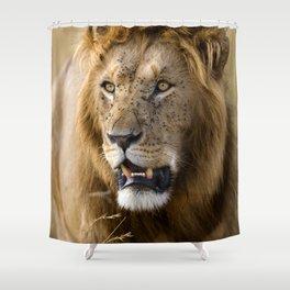Lion, Masai Mara Shower Curtain