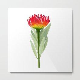 Flame Protea Flower Metal Print