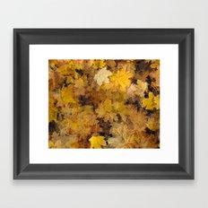 Maple Leaves 2013 Framed Art Print
