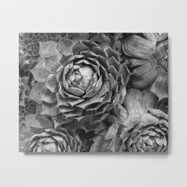 black and white succulents Metal Print