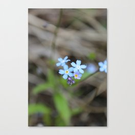 Forget-Me-Nots Canvas Print