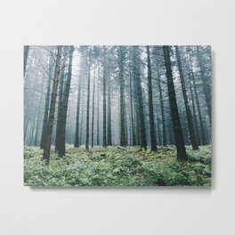 Forest adventures at dusk Metal Print