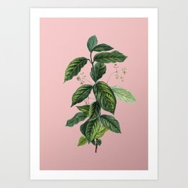 Vintage Broadleaf Spindle Botanical Illustration on Pink Art Print