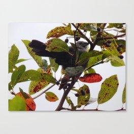 Catbird tree Canvas Print