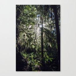Quinalt Rainforest 05 Canvas Print