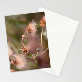 The Mimosa Stationery Cards