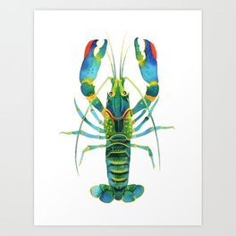 Red Claw Crayfish Lobster Art Print