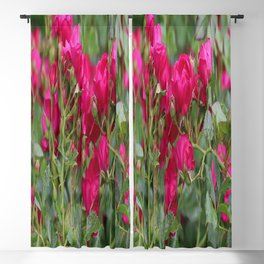 The red roses bloom in the summer arboretum Blackout Curtain