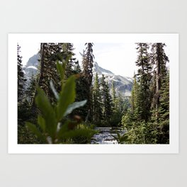 Into the Wild while in Whistler Canada Art Print