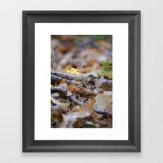 Seedling - B Framed Art Print