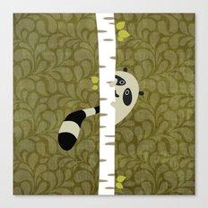 A shy raccoon Canvas Print