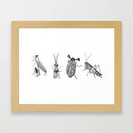 Arthropods Framed Art Print