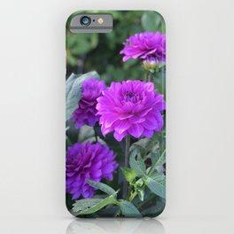 Purple flower in Butchart's Garden iPhone Case