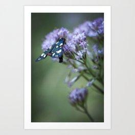 A black butterfly on a wildflower Art Print