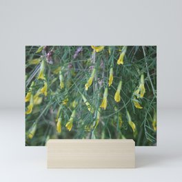 Weeping Caragana Flowers Mini Art Print