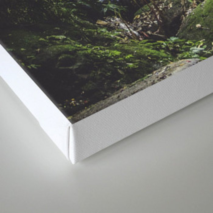 Green Life Canvas Print