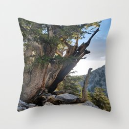 Ancient Bristlecone Pine Forest #3 Throw Pillow