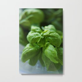 Basil leaves Metal Print