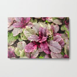Herbaceous plant Ajuga Sunny day Texture Metal Print
