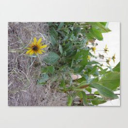Sunshine Yellow - 2  Canvas Print