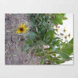 Sunshine Yellow - 2  Canvas Print