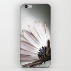pink daisy. iPhone & iPod Skin