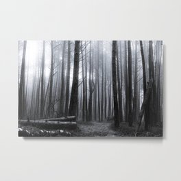 Winter forest trees #13 - Black and white Metal Print