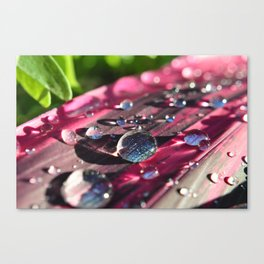 look a little closer Canvas Print