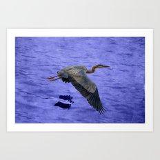 Great blue heron in fly Art Print