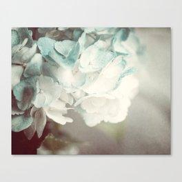 Soft Teal Hydrangea  Canvas Print