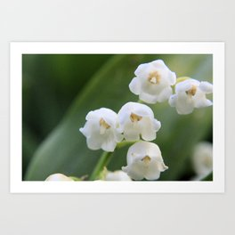 Bloomed White Flower Close-Up Art Print