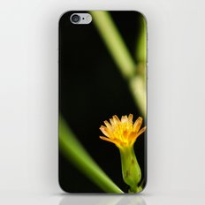 Orange Wildflower iPhone & iPod Skin